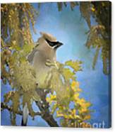 Among The Catkins Canvas Print