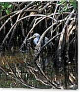 Among The Mangrove Roots Canvas Print