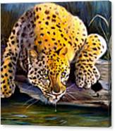 Amur Leopard  Spotted Something Canvas Print