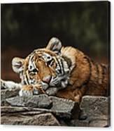 Amur Tiger Twin Canvas Print