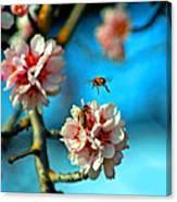 An Almond Pollen Day Canvas Print