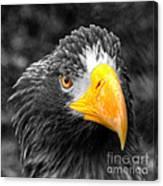 An American Eagle  Canvas Print