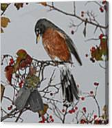 An American Robin Remembers Canvas Print