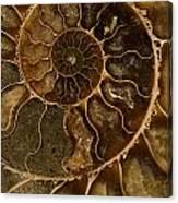An Ancient Ammonite Pattern II Canvas Print