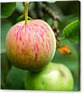 An Apple - Featured 3 Canvas Print