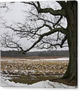 An Appleton Tree And Field In Winter Canvas Print