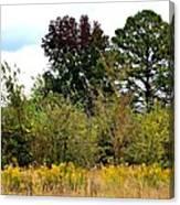 An Autumn Day In Alabama Canvas Print