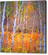 An Autumn Symphony Of Colour Canvas Print