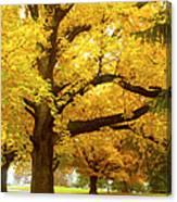 An Autumn Walk - 2 Canvas Print
