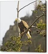 An Eagle In The Spring Canvas Print