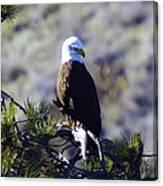 An Eagle In The Sun Canvas Print