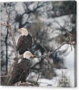 An Eagle Pair  Canvas Print