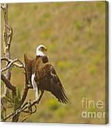 An Eagle Stretching Its Wings Canvas Print