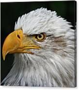 An Eagle's Portrait Canvas Print