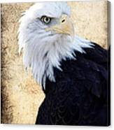 An Eagles Standpoint II Canvas Print