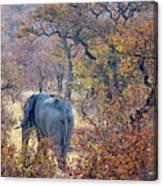 An Elephant Making Its Way Canvas Print
