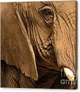 An Elephant's Eye Canvas Print