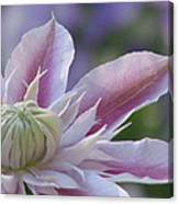 An Exotic Clematis Canvas Print
