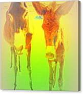Donkey Mother And Son On An Extremely Hot Day  Canvas Print