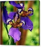 An Eyeful Iris Canvas Print