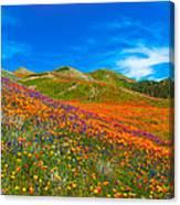 An Ocean Of Orange  Canvas Print