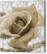 An Old Fashion Rose Canvas Print