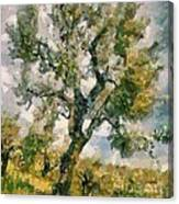 An Old Olive Grove Canvas Print