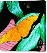 An Orange Butterfly Canvas Print