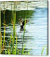 An Out Of Focus Flap  Canvas Print