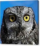 An Owl Canvas Print