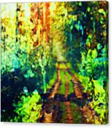 An Uncertain Path Canvas Print