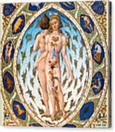Anatomical Man Canvas Print