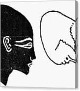 Anatomy: Human Cranium Canvas Print