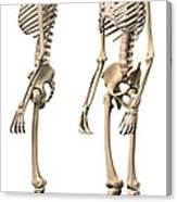 Anatomy Of Male Human Skeleton, Side Canvas Print