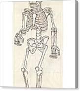 Anatomy Scrolls - Front Canvas Print