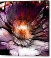 Ancient Flower 1 Canvas Print