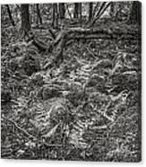 Ancient Grove Canvas Print