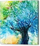 Ancient Olive Tree  Athenas Gift  Canvas Print