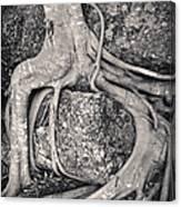 Ancient Roots Canvas Print