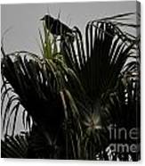 And A Crow Oh Oh In A Palm Tree Canvas Print