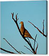 And A Dove In A Tree Canvas Print