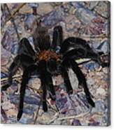 And Along Came A Little Spider .  Canvas Print