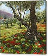 Andalucian Olive Grove Canvas Print