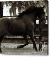Andalusian Dream Canvas Print