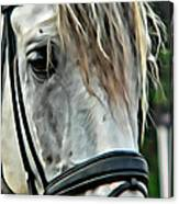Andalusian Eye Canvas Print