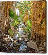 Andreas Creek In Andreas Canyon In Indian Canyons-ca Canvas Print