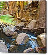Andreas Creek In Indian Canyons-ca Canvas Print