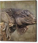 Anegada Ground Iguana - Houston Zoo Canvas Print