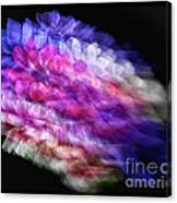 Anemone Abstract Canvas Print