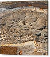 Anemone Geyser In Upper Geyser Basin Canvas Print